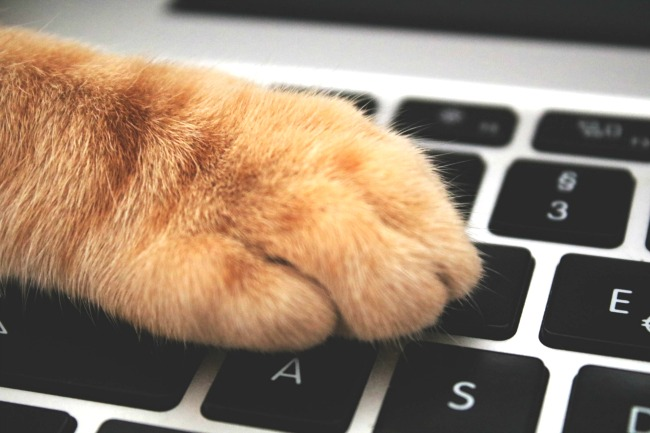 19 Free Typing Games for Kids to Learn Keyboarding: keyboard with a cat paw on it