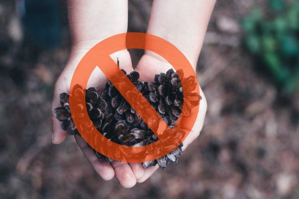 The Horrors Of Unstructured Play childs hand holding pinecones with international no symbol going through it