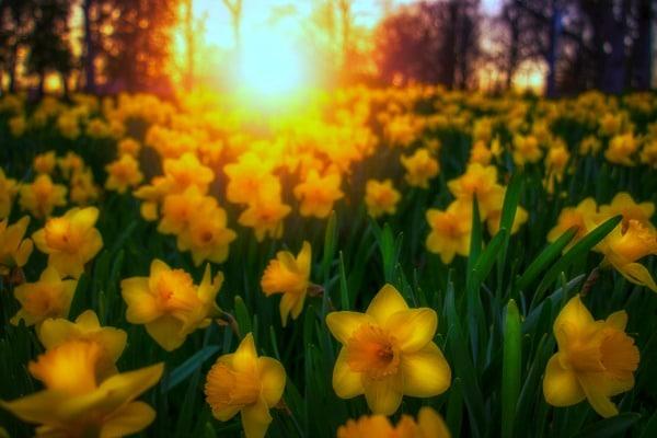 Spring Solstice vs Spring Equinox
